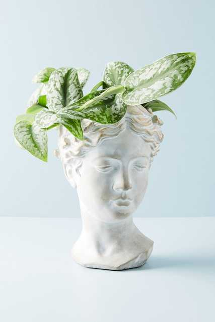 Grecian Bust Pot -  Large - Anthropologie