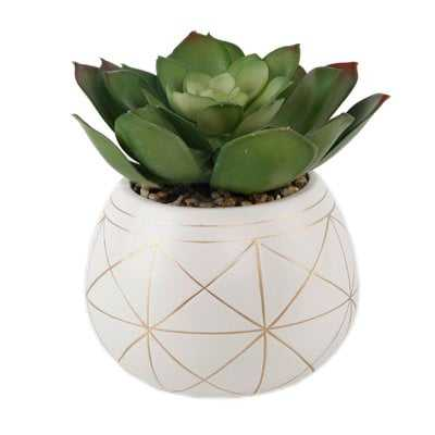 Geo Hand Painted Ceramic Agave Plant in Planter - Wayfair