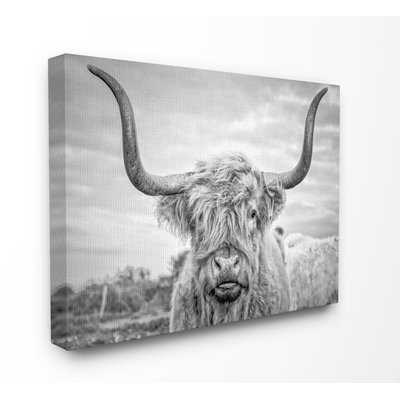 Highland Cow - Picture Frame Photograph Print on Canvas - AllModern
