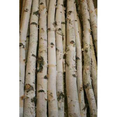 Birch Branch - Wayfair