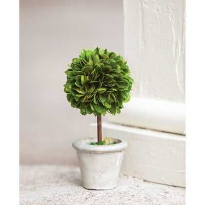 Mini Desktop Boxwood Topiary in Pot - Birch Lane