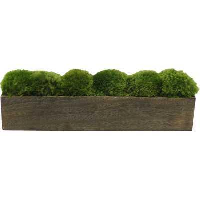 Moss in Planter - Wayfair