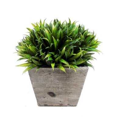 Faux Rye Grass Square Tapered in Pot - AllModern