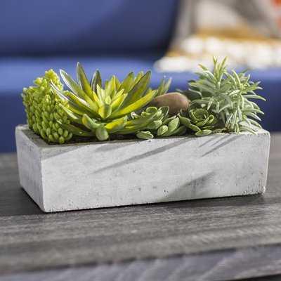 Floor Succulent Plant in Concrete Planter - AllModern