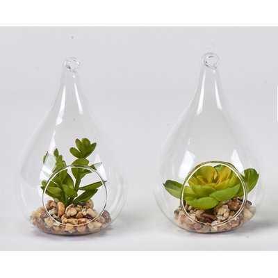 Faux Succulent Desktop Plant in Glass Vase Set (Set of 2) - Wayfair