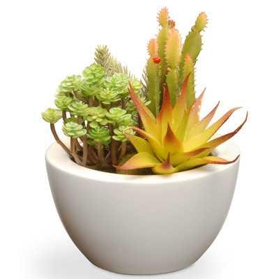 Succulent Desk Top Plant in Pot - Wayfair