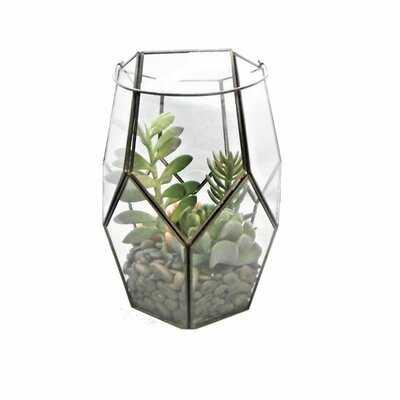 Succulent Succulent in Terrarium - Wayfair