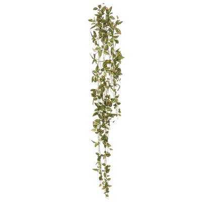 Wandering Jew Hanging Bush Ivy Plant - Wayfair
