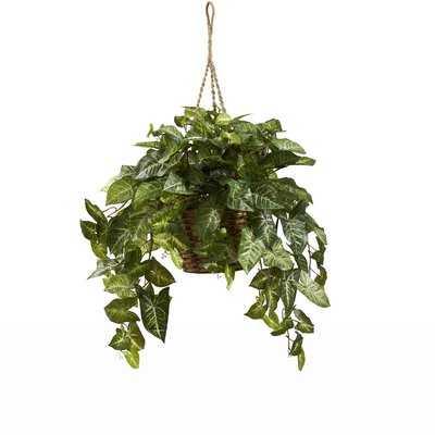 Nepthytis Hanging Plant in Basket - Wayfair