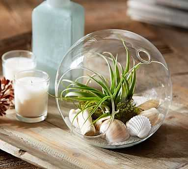 Live Airplant Terrarium Garden - Pottery Barn