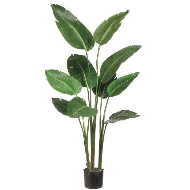 ALLSTATE FLORAL 5 ft. Bird of Paradise Plant in Plastic Pot - Home Depot