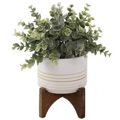 Eucalyptus Plant in Pot - Wayfair