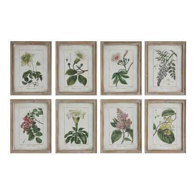 Flower Illustrations - 8 Piece Picture Frame Print Set on Wood - Birch Lane