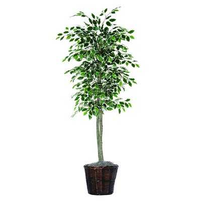 Economy Artificial Potted Natural Variegated Ficus Tree in Basket - Wayfair
