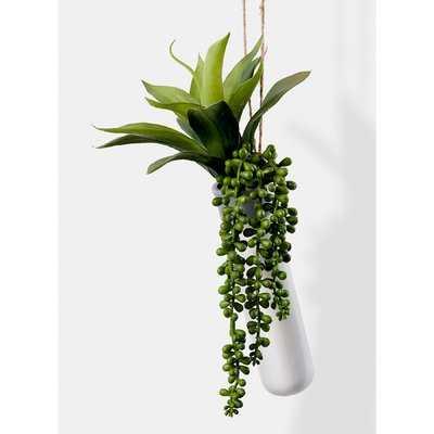 Hanging Succulent Plant in Ceramic Planter - Wayfair