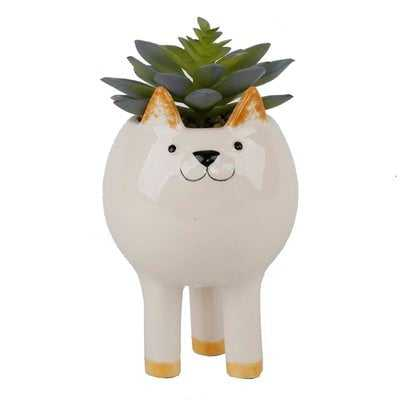Tall Cat Desktop Succulent Plant in Pot - Wayfair
