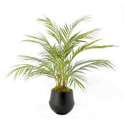 Floor Palm Plant in Pot - Wayfair