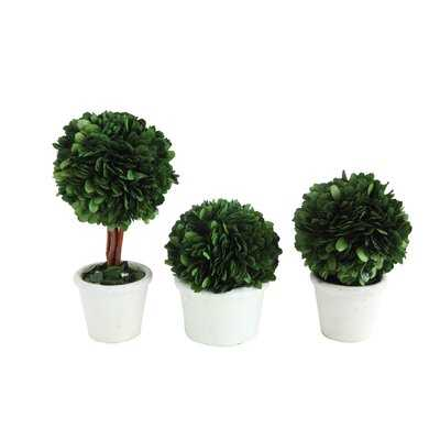 Single Ball Preserved Boxwood Topiary in Pot - Wayfair