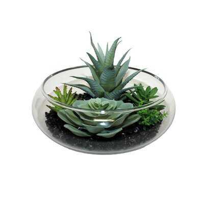 Dish Garden Aloe Succulent - Wayfair