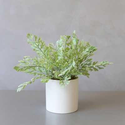 Artificial Boston Fern Desktop Palm Plant in Ceramic Pot - Wayfair