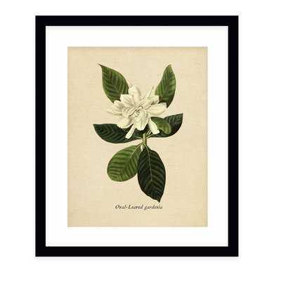 'Botanical Vintage Nine' Graphic Art Print - Wayfair