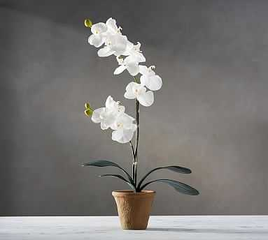 """Faux Potted Orchid, 21"""" - Pottery Barn"""