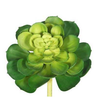 Cactus Succulent Plant Set of 6 - Wayfair
