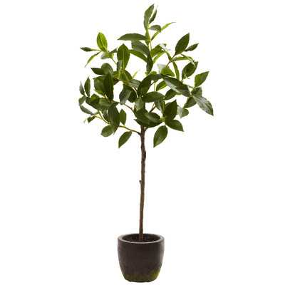 Topiary in Decorative Planter - Wayfair
