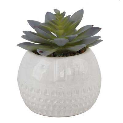 Round Ceramic Desktop Succulent Plant in Pot - Wayfair