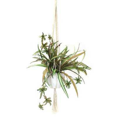 Hanging Spider Flowering Plant in Planter - Wayfair