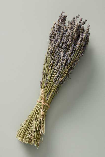 Dried Lavender Bouquet - Anthropologie