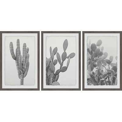 'Cactus Variety Triptych' 3 Piece Framed Photographic Print Set - Wayfair