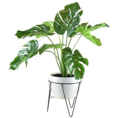 Monstera Foliage Plant in Pot (faux) - Wayfair