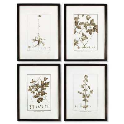'Sepia Tone Botanical' 4 Piece Picture Frame Graphic Art Set - Birch Lane
