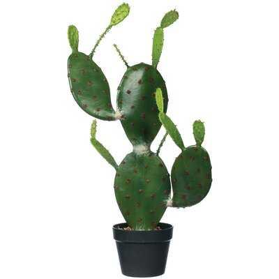 Cactus Plant in Pot - Wayfair