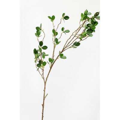 Greenery Real Touch Aglaia Odorata Plant - Wayfair