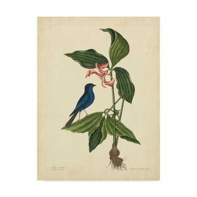 'Bird And Botanical IV' Graphic Art Print on Wrapped Canvas - Wayfair