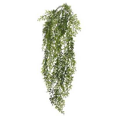 Lemon Beauty Leaf Vine Foliage Plant - Wayfair