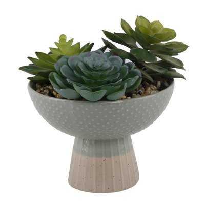 Succulent in Planter - Wayfair