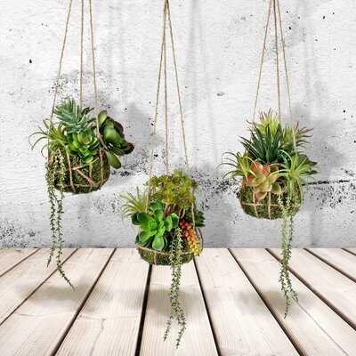 3 Piece Plastic Hanging Agave Succulent Set - Wayfair