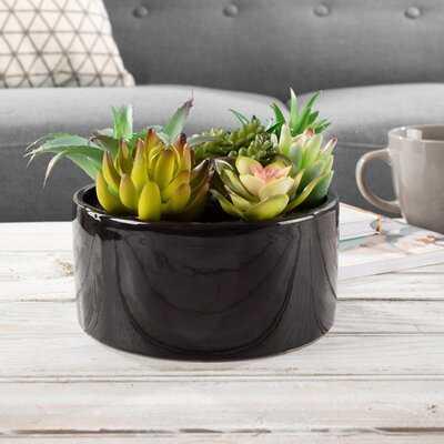 7 Piece Assorted Faux Agave Succulent in Pot Set - Wayfair