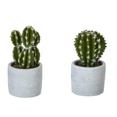 2 Piece Cactus Desktop Succulent Plant in Pot Set (Set of 2) - Wayfair