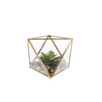 Desktop Succulent Plant in Glass Terrarium - Wayfair