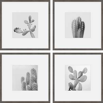 'Cacti Types Quadriptych' 4 Piece Framed Graphic Art Print Set on Paper - Wayfair