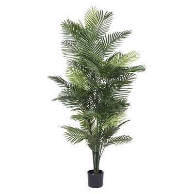 Robellini Palm Tree in Pot - Wayfair