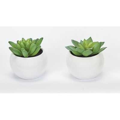 Succulent Desktop Plant in Pot (Set of 2) - Wayfair
