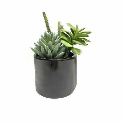 Succulent Succulent in Pot - Wayfair