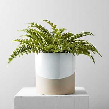 Faux Botanicals, Potted Fern (Planter Sold Seperately) - West Elm