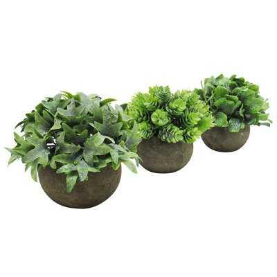 3 Piece Grass Pine Leaf Mix Ivy Plant in Pot Set - Wayfair