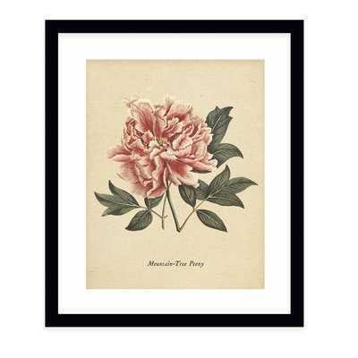'Botanical Vintage Eight' - Picture Frame Graphic Art Print on Paper - Birch Lane
